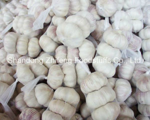 China Shandong Normal White Garlic pictures & photos