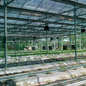 High Quality Low Price China Glass Greenhouse for Vegetable pictures & photos