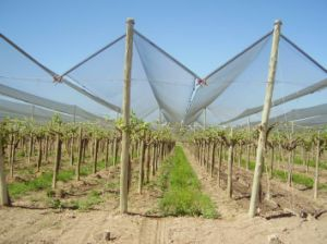 100% HDPE Anti Hail Net pictures & photos