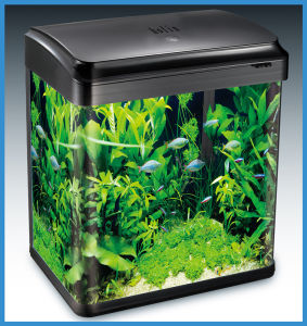 Fashion Design Clear Globular Aquarium Fish Tank Hot Selling (HL-ATC20) pictures & photos