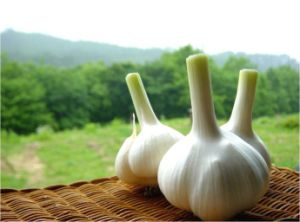 Export Chinese New Crop Good Quality White Garlic pictures & photos