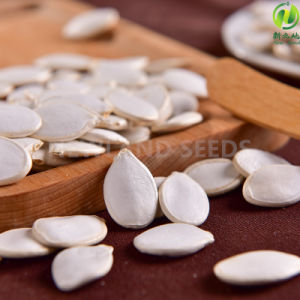 Snow White Pumpkin Seeds 13mm 14mm From Origin with pictures & photos