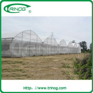 Commercial film greenhouse for sale pictures & photos