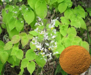 Epimedium Extract  10: 1, 20: 1 & Icariin 50% 60% 80% 98% pictures & photos