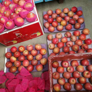 Hot Selling! Fresh Red Qinguan Apple pictures & photos