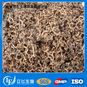 High Quality Plant Extract Semen Hoveniae Extract/Hovenia Dulcis Thunb. P. E