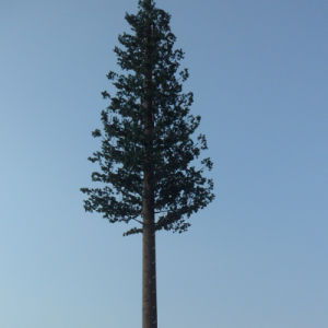 Galvanized Pine Decorating Trees Self Supporting GSM Antenna Pole Tower pictures & photos