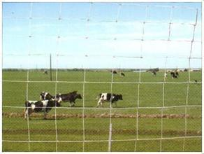 Woven Wire Fence/Goat Sheep Fence/Cattle Field Fence pictures & photos