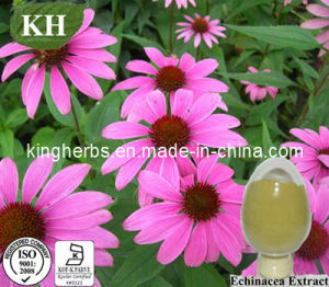 Factory Supply Natural Immunity Echinacea Extract pictures & photos
