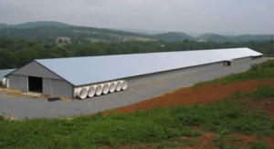 Automatic Types of Steel Structure Poultry House (DG6-003) pictures & photos