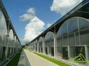 Multi-Span Gothic Film Greenhouse for Farm. pictures & photos