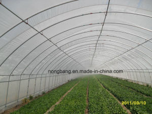 Hot Sale Vegetables/Garden/Flowers/Farm Glass Greenhouse pictures & photos