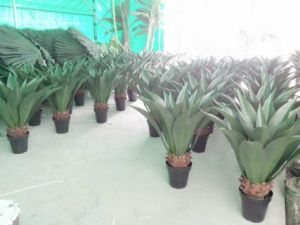 High Quality of Artificial Plants of Agave Green 136cm Jf12010560 pictures & photos