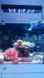 Hot 72W 40cm Programmable and Dimmable Marine LED Aquarium Lighting pictures & photos