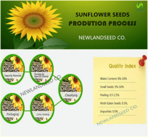 Chinese New Crop Sunflower Seeds 363 to Iran pictures & photos