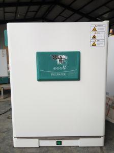 Constant-Temperature Incubator (DH3600) , Lab Incubator pictures & photos