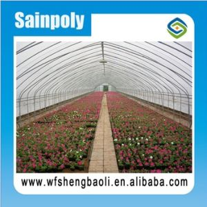 Hot Sale Easily Installed Agricultural/ Commercial Green House pictures & photos