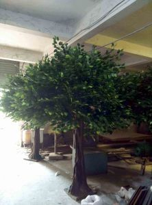 Artificial Banyan Tree for Indoor Decoration pictures & photos
