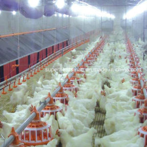 Automatic Poultry Laying Nest for Breeder and Layer pictures & photos
