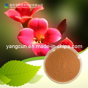 Rhodiola Rosea Extract Salidroside 98% pictures & photos