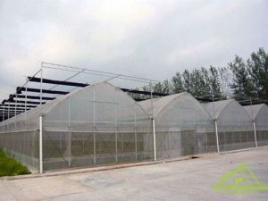 Multi-Span Gothic Film Greenhouse for Farm.