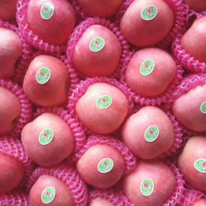 Top Quality of Fresh Blush Red FUJI Apples pictures & photos