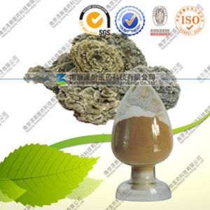 Factory Direct Supply Pure Natural Coriolus Versicolor Polysaccharide pictures & photos