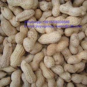 China Confectionary Raw Peanut in Shell pictures & photos