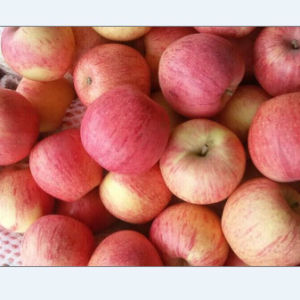 Export Standard Quality of Fresh Qinguan Apple pictures & photos