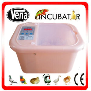 Best Quality with Good Price Incubator for 6 Eggs, 12 Eggs. pictures & photos
