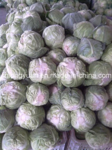 Fresh Flat Cabbage with Mesh Bag Packing pictures & photos