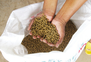 Low Price High Quality Tilapia Fish Feed
