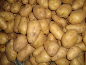 Holland Potato pictures & photos