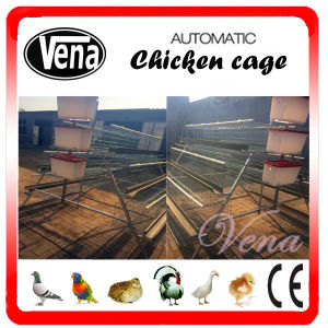 Chicken Cage with Automatic Drinker System pictures & photos