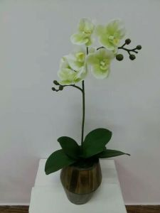 Best Selling 2heads Orchid Flower Gu-Jys162929 pictures & photos