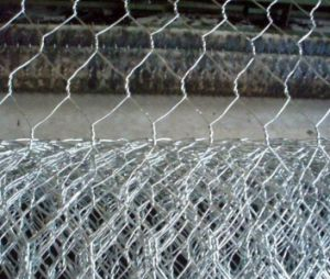 PVC Coated Hexagonal Wire Mesh/Poultry Mesh/Bird Cages pictures & photos