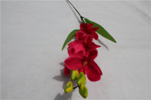 Real Touch Artificial Phaleanopsis Orchid pictures & photos