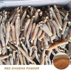 Natural Red Ginseng Straight Powder