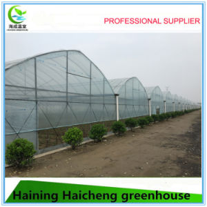Multi Span Tunnel Green House for Flowers Growing pictures & photos