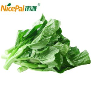 100% Natural Spray Dried Vegetable Powder Chinese Flowering Cabbage Powder pictures & photos
