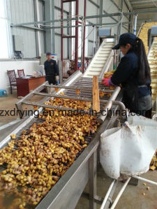 2016 Hot Sale Industrial Stainless Steel Fruit Dryers Mesh Belt Dryer