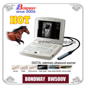 Digital Laptop Veterinary Ultrasound Scanner Ultrasound Imaging Bovine Ultrasound Swine Ultrasound Sonography