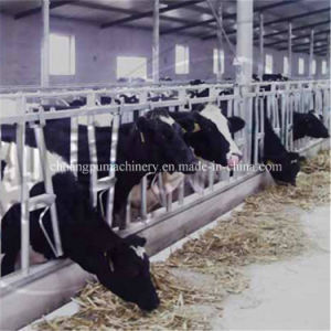 Farm Cow Headlock with 3 Mm Thickness Hot-Galvanized Steel Pipe pictures & photos