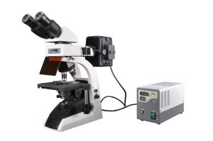 Bestscope BS-2072fb Fluorescent Biological Microscope pictures & photos