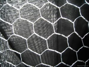 Cheap Galvanized Hexagonal Wire Netting pictures & photos