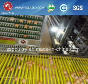 Poultry Chicken Farm Equipment Layer Cage Coop pictures & photos