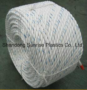 PP Danline Mooring Rope Equal to Dsr Quality pictures & photos