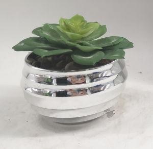 Artificial Plants Eletroplating Pot Succulent pictures & photos