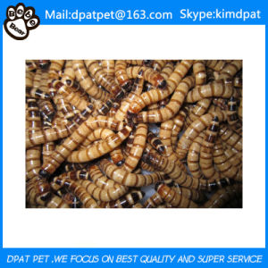 Wholesale Dried Mealworms for Pet Food pictures & photos