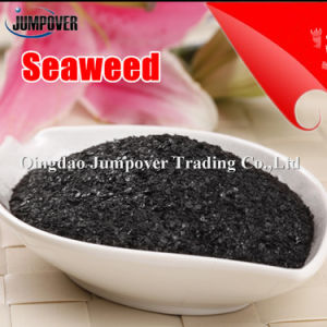 High Quality Fertilizer Synergist, Seaweed Extract pictures & photos